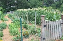 Garden -About-