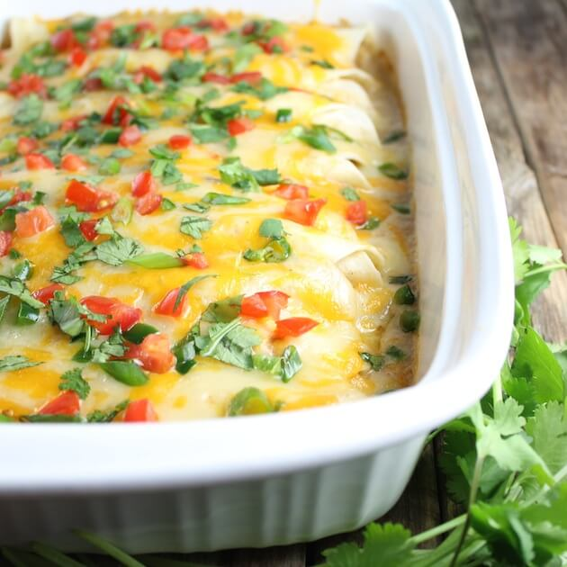 Eye level close up of Cheesy Chicken Enchiladas in casserole dish garnished with tomatoes and cilantro