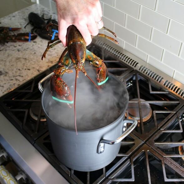 lobster in the potE