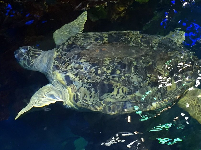 Myrtle The Turtle Boston Aquarium